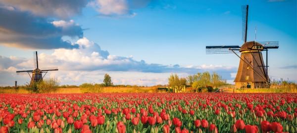 Subsidieregeling 75 jaar vrijheid in Zuid-Holland