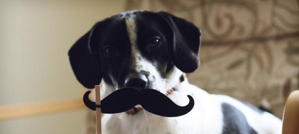 Movember. Of waar je ProBiblio's onderzoekers allemaal voor in kunt schakelen!
